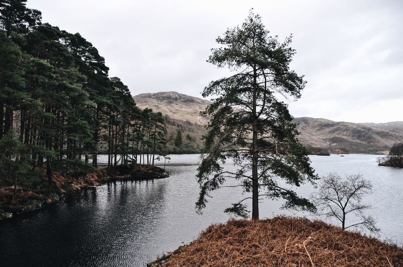 Scots pines by Loch Trool in the Galloway Hills EyeEm Nature Lover Landscape_Collection Loch  Moody Sky Scotland TheWeekOnEyeEM Tranquility Travel Tree Trees Beauty In Nature Lake Landscape Mountain Nature No People Outdoors Scenics Scots Pine Tranquil Scene Tree Water