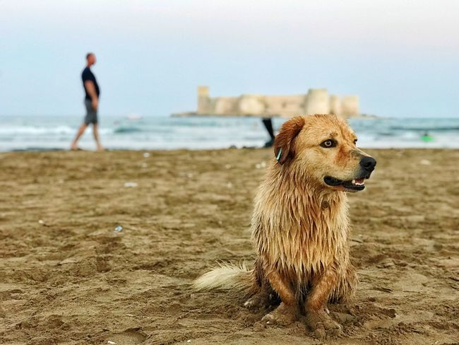 holiday sea and dog Beach Land Dog Canine One Animal Water Animal Animal Themes Sand Mammal Pets Domestic Sea Domestic Animals Focus On Foreground Nature Vertebrate Day Sky Outdoors