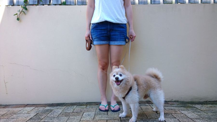 Low Section Of Woman With Pet On Sidewalk