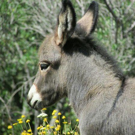 Have a wonderful Sunday! Good Morning! Donkey EyeEm Nature Lover Farm Creatures