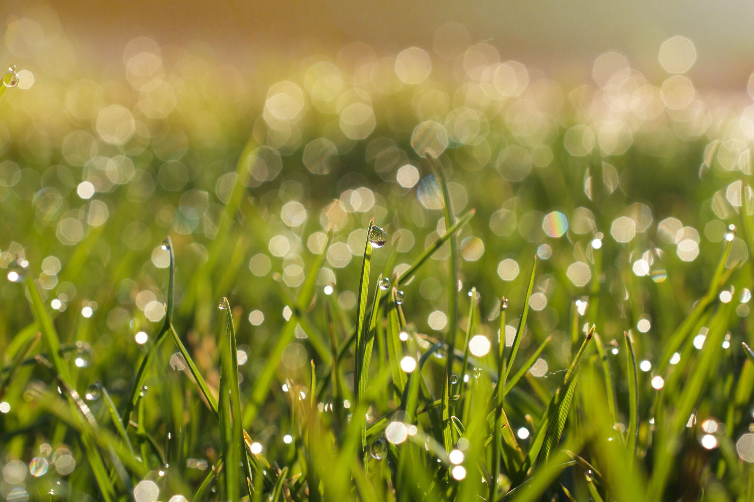 growth, flower, freshness, fragility, beauty in nature, nature, plant, field, green color, focus on foreground, close-up, selective focus, white color, blooming, flower head, wildflower, grass, outdoors, day, petal