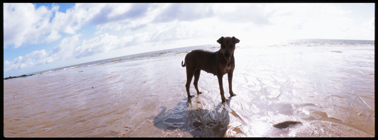 The Island of Bulls Mararjò Analogue Photography Beach Blue Brazil Bulls Bulls On The Beach Caribean Clouds And Beach Dog On Beach Dog Reflected In Water Fisherboat Island Island Life Joanes Marajó Marajó Island No People Outdoors Panoramic Photography Salvaterra Slide South America Travel Trees On The Beach
