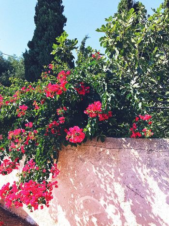 Flower Growth Plant Nature No People Blooming Day Freshness Outdoors Summer Kefalonia Greece Tropical Beauty Shadow Shadows & Lights