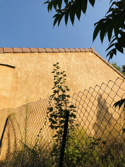 Architecture Barrier Boundary Building Building Exterior Built Structure Day Fence Growth House Low Angle View Nature No People Outdoors Plant Protection Safety Sky Tree Wall