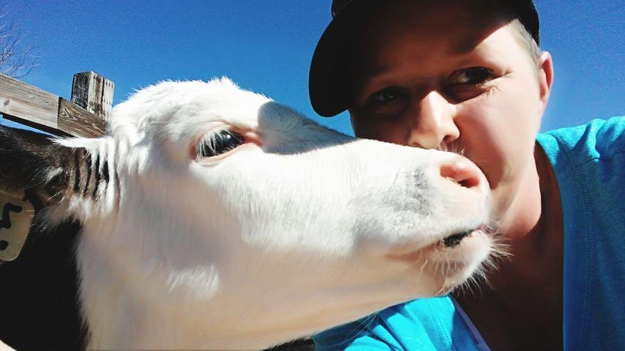 Close-up of woman kissing calf