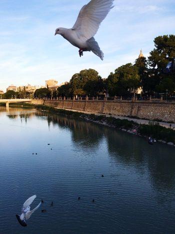 My City I Love My City River Stretphotography