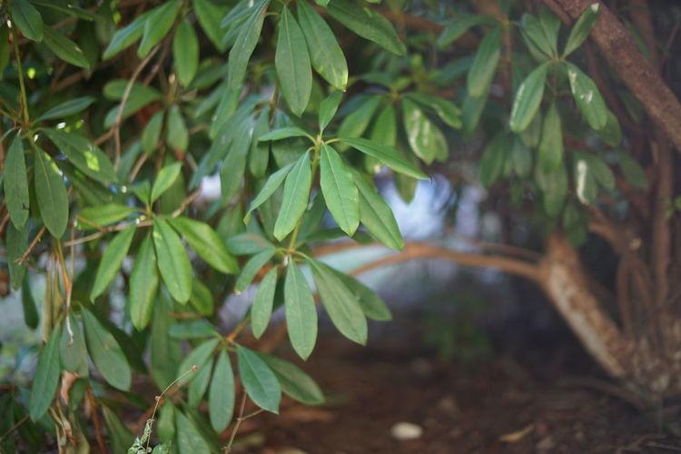 Close-up of raindrops on tree