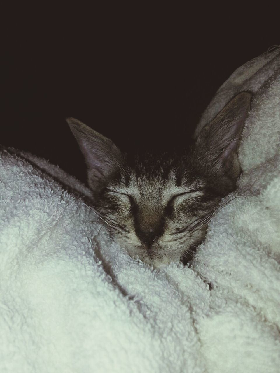 domestic cat, one animal, pets, animal themes, domestic animals, mammal, eyes closed, feline, sleeping, cat, relaxation, indoors, bed, home interior, lying down, no people, close-up, day