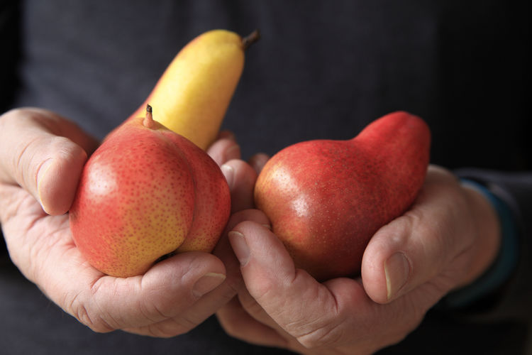 Midsection of man holding pears