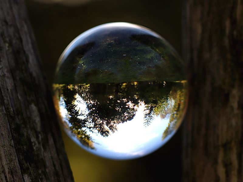 Lensball Lensball Photography Close-up Reflection No People Glass - Material Nature Focus On Foreground Geometric Shape Outdoors Glass Day Tree Transparent