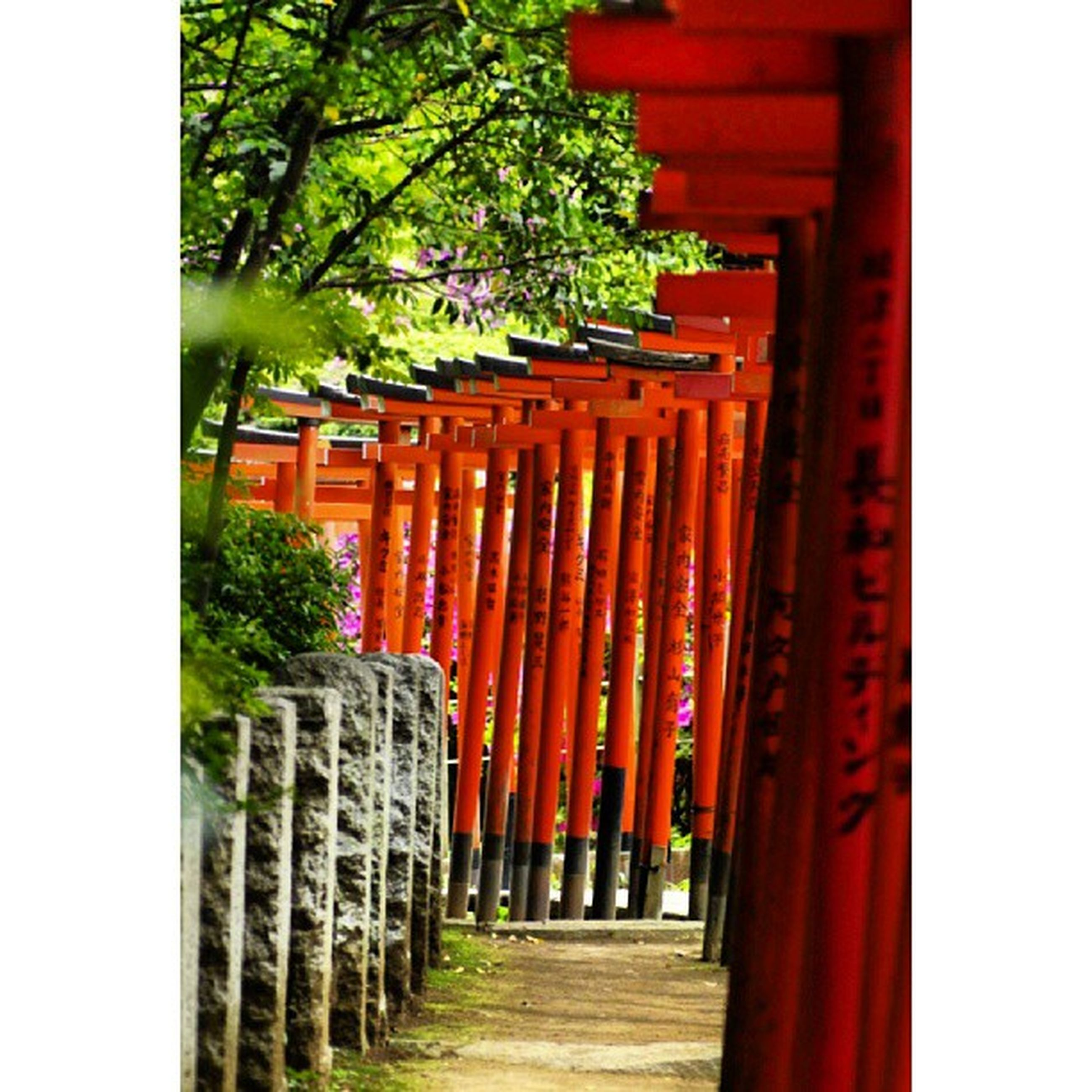 architecture, red, built structure, building exterior, tree, in a row, the way forward, entrance, architectural column, column, gate, day, outdoors, temple - building, cultures, diminishing perspective, auto post production filter, no people, religion, steps