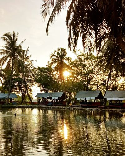 Saturday sunset.. -namiamora- Reflection Water Sunset Tree Outdoors River Sky Vacations No People Nature Palm Tree Beauty In Nature Day Oppoindonesia Oppothography Oppocamera Oppof1s OPPO Sellphotos Sellphoto Forsell Nature Dramatic Sky Built Structure Huts And Sky
