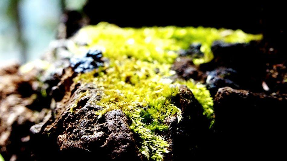 Trees Nature Green Grassy Light And Shadow Kodikanal India