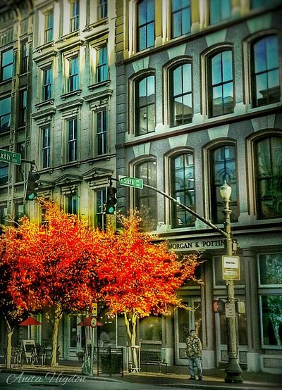 Sixth & Main. Urban Photography Autumn Colors Architecture Louisville, Kentucky Trees No Edit No Fun Trees In The City Autumn Color