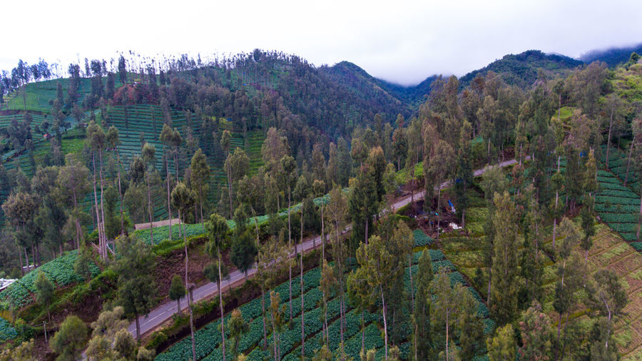 looks the Road in the high hills Plant Tree Scenics - Nature Mountain Tranquil Scene Sky Landscape Environment Tranquility Nature No People Growth Beauty In Nature Land Day Non-urban Scene Mountain Range Outdoors Forest Green Color Winemaking Bromo Bromo-tengger-semeru National Park Bromo Mountain