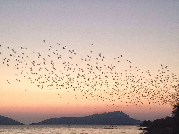 Bird Animal Themes Sunset Mountain Tranquility Tranquil Scene Beauty In Nature Nature Nature EyeEm Nature Lover Sea And Sky Sea