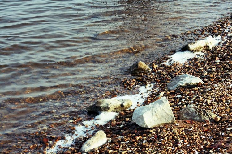 Monroe Lake, Indiana Water Beach Sea Nature No People Land Motion Day Animal Animal Themes High Angle View Wave Rock Vertebrate Solid Animal Wildlife Outdoors Beauty In Nature One Animal Pebble Pollution Flowing Water Lake Monroe Lake Monroe, Indiana