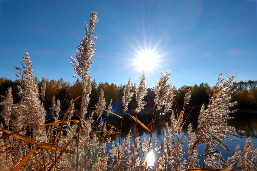 Autumn in Germendorf Brandenburg Plant Sun Sunlight Sky Nature Lens Flare Tree Sunbeam Beauty In Nature Day Growth Tranquility Sunny Cold Temperature No People Winter Tranquil Scene Land Snow Scenics - Nature Outdoors Bright