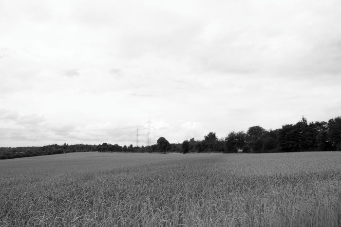 Black And White Photography On Tour Outdoors Outdoors Photography Focus On Foreground Close-up Summer Art Photgraphy Things Around Me Card Design Personal Perspective Beauty In Nature Art Is Everywhere Art Photography Growth Scenics Nature Plant Sky And Clouds Field Landscape Agriculture Wheat Field Wheat Tree