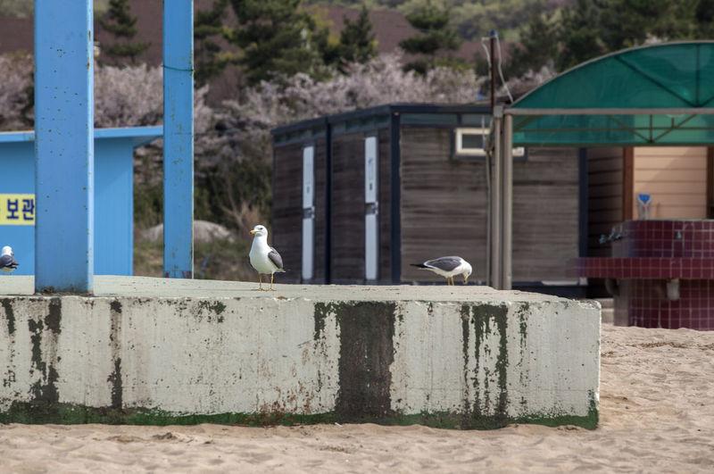 Close-up of seagulls