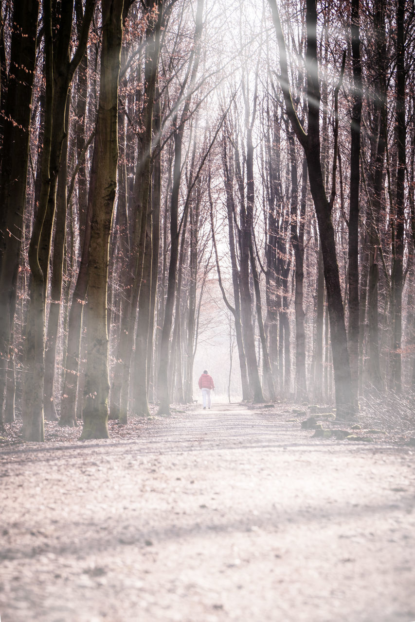 tree, forest, plant, one person, tranquility, trunk, tree trunk, nature, full length, land, fog, rear view, the way forward, walking, woodland, day, direction, adult, solitude, outdoors, treelined, change