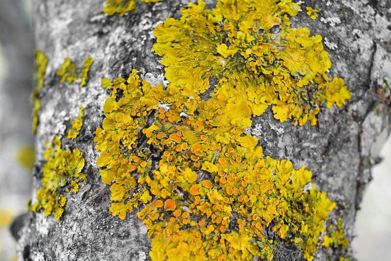 Close-up of yellow tree trunk