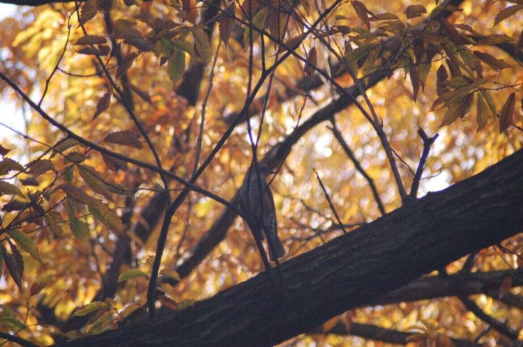 Nature Tree Leaf Branch Low Angle View No People Autumn Beauty In Nature Outdoors Day Close-up Sky Bird Forest Beauty In Nature Colors Of Autumn Autumn Birdontree EyeEm Nature Lover Tokyo Tokyonature