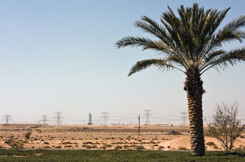 Blue Clear Sky Day Desert Nature No People Non-urban Scene Palm Tree Palm Trees Power Lines Power Lines Against Sky Remote Sand Succulents Tranquil Scene