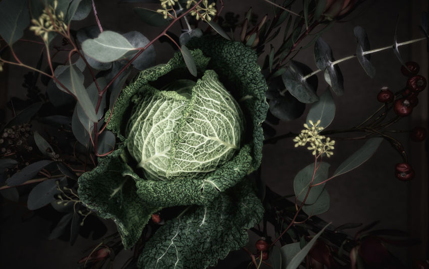 Beauty In Nature Cabbage Close-up Day Flower Flower Head Flowrrs And Plants Fragility Freshness Green Color Growth High Angle View Leaf Leaf Vein Nature No People Outdoors Plant Savoy Cabbage Wirsing