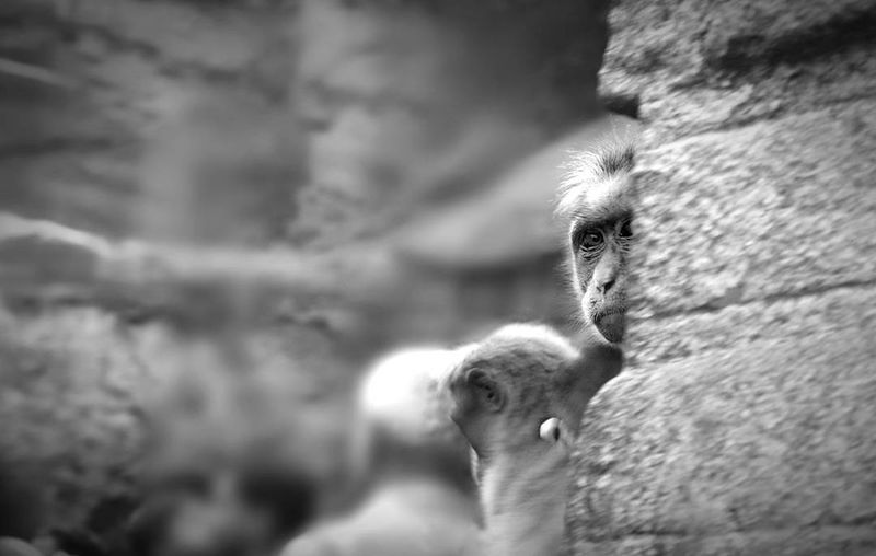 Earth is not only for humans Animal Themes Animal Wildlife Animal Mammal Humanıty Wildlife & Nature Wildlifephotography Blackandwhite Wwoof Bluecross