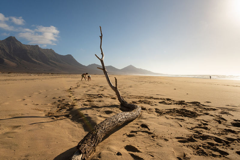 Driftwood on sand against sky