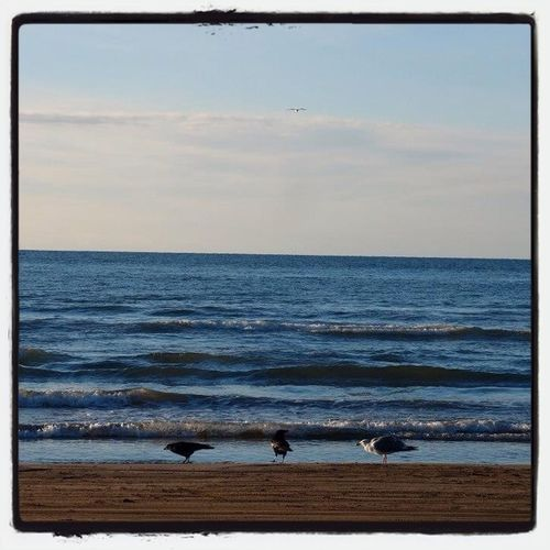 Watching The Sea Seagulls 千里浜