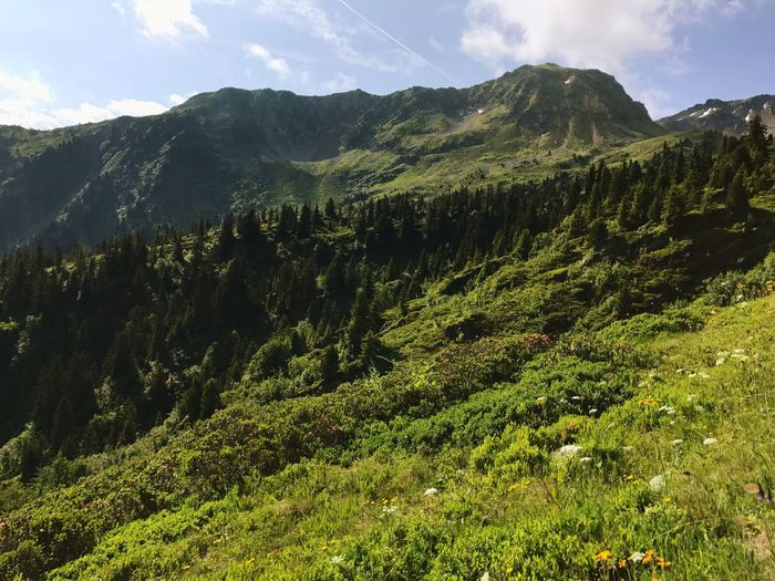 Alps Pine Tree Nature Mountain Growth Day No People Beauty In Nature Green Color Outdoors Scenics Mountain Range Landscape Tree