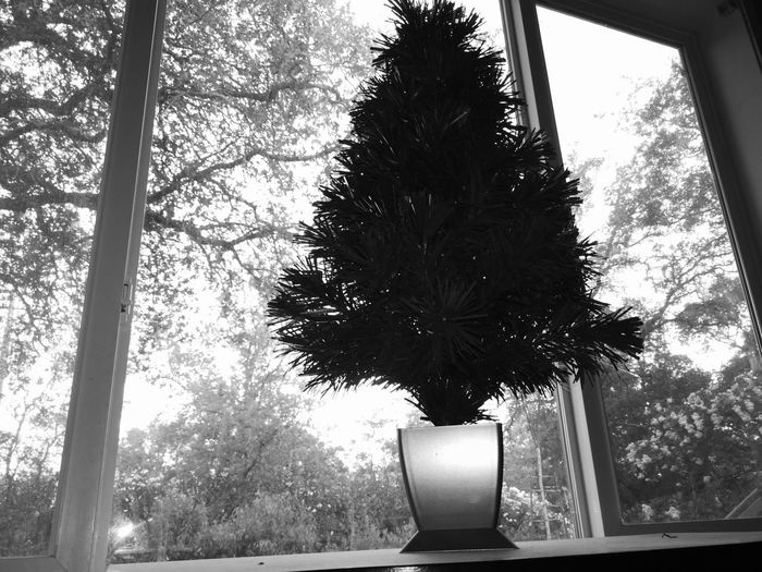Monochrome monochrome photography Monochrome_life Monochromatic Monochrome _ Collection Dark darkness and light Darkness Outdoors Beauty In Nature Capture The Moment Low Angle View Low Section Trip Tranquility Tree Window Branch Architecture Sky Creeper Plant Growing