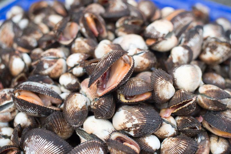 Close-up of seashells
