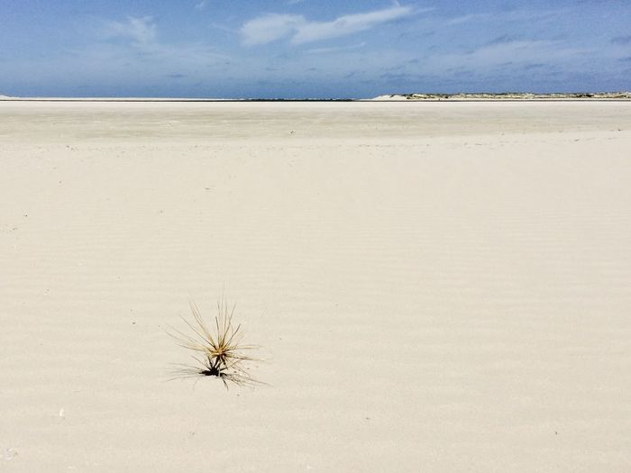 EyeEmNewHere Isolated Arid Climate Beach Hot Weather No People Sand Tumble Weed
