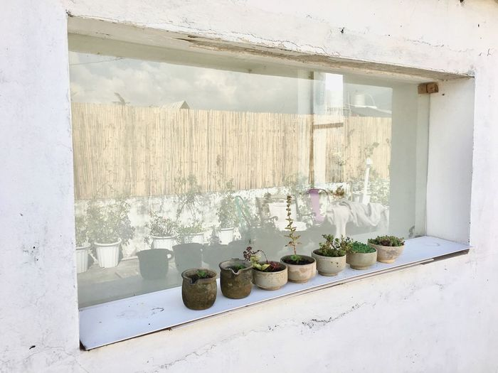 EyeEm Selects Window Indoors  No People Variation Day Plant Flower Shelf Food White Color White Background Decoration Lifestyle