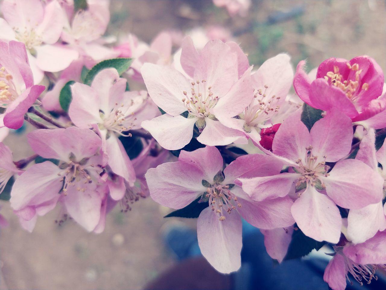 Flower Head Flower Tree Pink Color Water Springtime Branch Beauty Petal Blossom