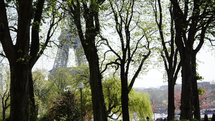 Tree Plant Tree Trunk Trunk Forest Growth Land Tranquility Nature Day No People Beauty In Nature Outdoors Tranquil Scene Scenics - Nature WoodLand Branch Landscape Environment Green Color Paris Tour Eiffel Boat Sea Bristol Ferien Brandenburg Havel