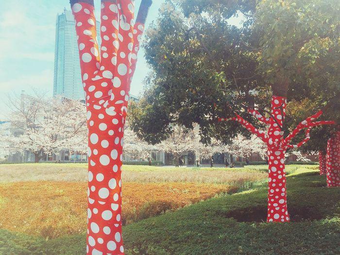 草間彌生仕様です! Yayoi Kusama Tree No People Nature Tokyo,Japan 草間彌生 Museum Cherry Blossoms Spring