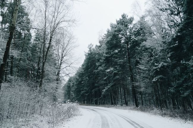 Tree Nature Road The Way Forward Cold Temperature Growth Snow Forest Transportation Beauty In Nature Winter No People Tranquility Day Outdoors Scenics Sky Snowing