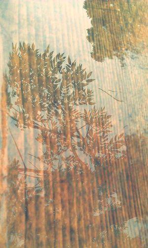 Fairy Mountain Shadow Cool 位于 Chongqing China