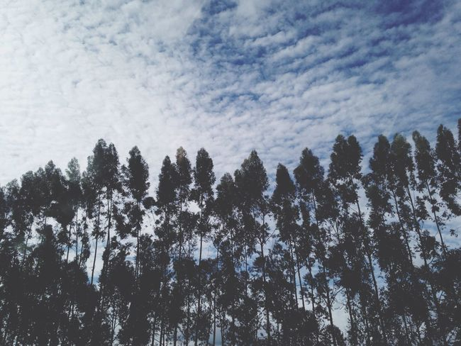 You can walk in the pine trees, you can sit down, you can hold the earth in your hands Jake Bugg