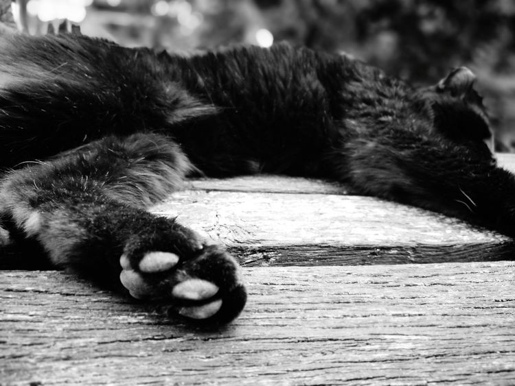Leisure time, lazy time EyeEm Selects One Animal Animal Animal Wildlife Animal Hair Mammal Paw Lying Down Close-up No People Outdoors Body Part Black Cat Lazy Day Sleeping Cat Animals In The Wild Day Nature Ear Animal Themes Cat Giant Panda