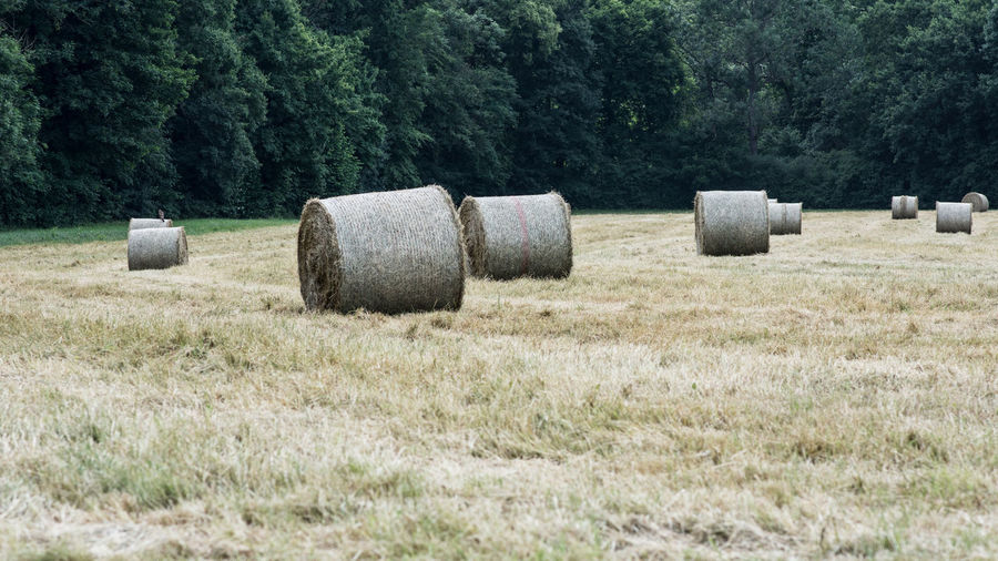 Agriculture Bale  Day Farm Field Grass Harvesting Hay Haystack Land Landscape Nature No People Outdoors Plant Rolled Up Rural Scene Tranquil Scene Tranquility Tree