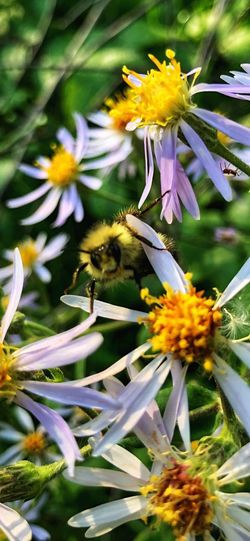 Close-up of bee on yellow flowering plant