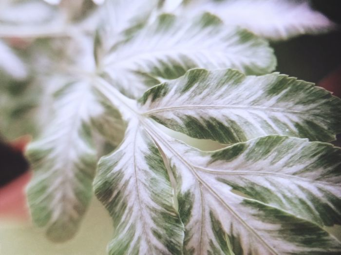Close-up of white flower leaves