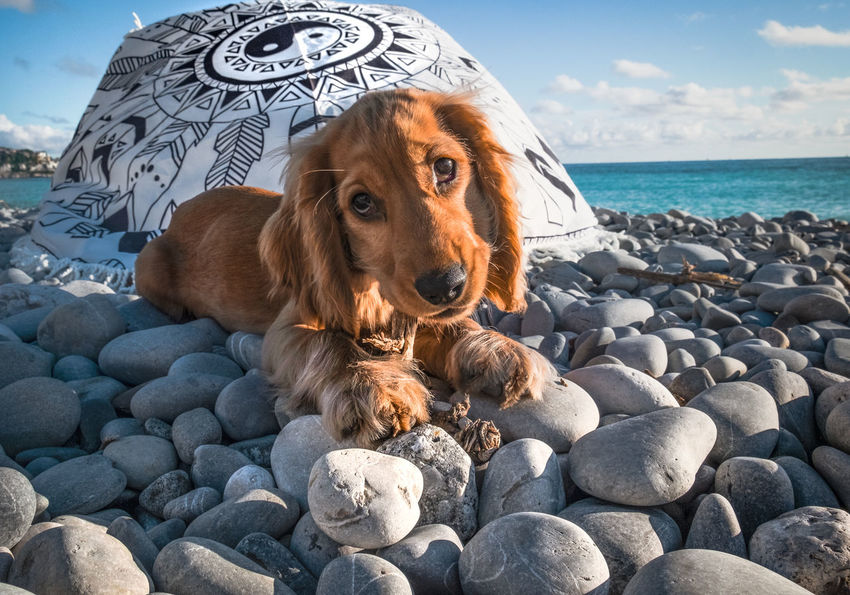 "Gli occhi dell""amore Product Photography Fujifilm FUJIFILM X-T1 Nice France Dog Love Dogs Of EyeEm Dogslife Dog❤ Beach EyeEm Selects Pets Water Sea Beach Dog Sand Portrait Sky Close-up Cocker Spaniel"
