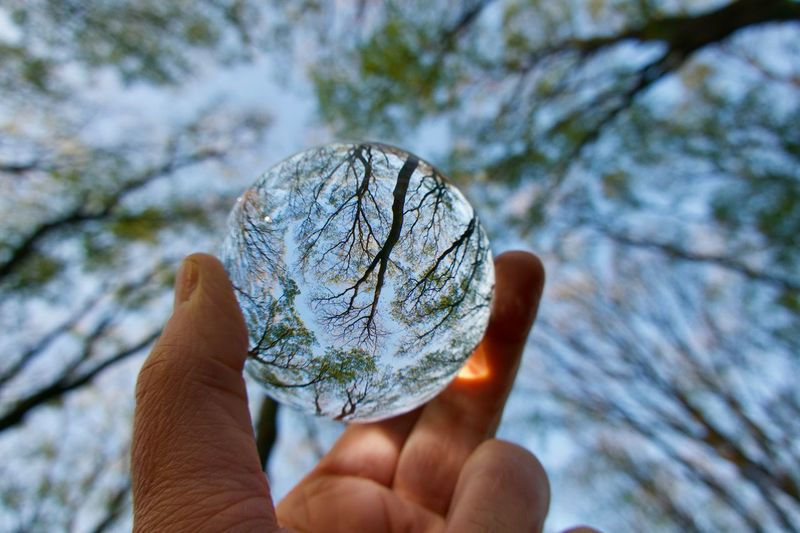 Close-up of hand holding crystal ball against trees and blue sky