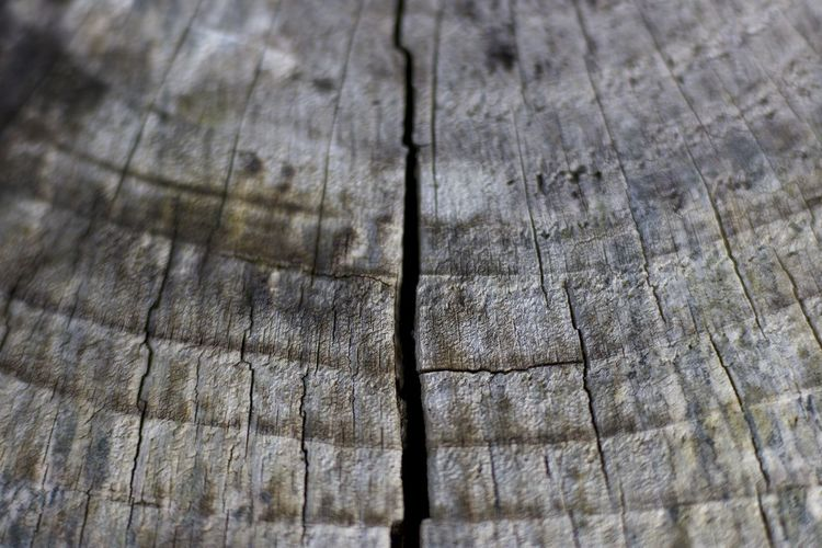 Abstract Backgrounds Brown Check This Out Close-up Cracked Cross Section Day Full Frame Hardwood Nature No People Outdoors Pattern Rough Taking Photos Textured  Timber Tree Tree Ring Tree Stump Wood - Material Wood Grain